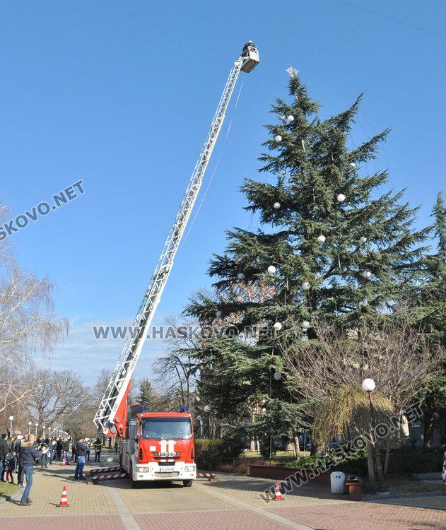 Кедърът на площада в Димитровград, който днес е 27,20 метра