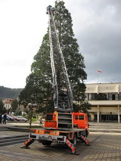Секвоята на площада в Троян, която през 2008г. беше 23 метра, а днес трябва да е над 30 метра, казват еколози
