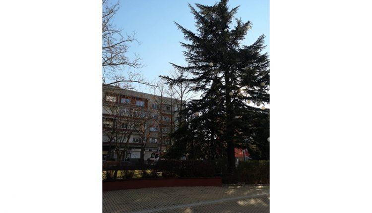 Димитровградското коледно дърво